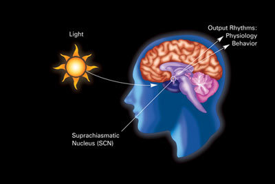 Effects of light type and quality on human circadian rhythm